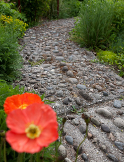 A flower in the foreground of a view of the reflexology path.